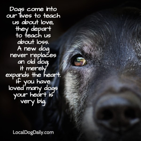 What To Say When A Friend S Dog Passes Away